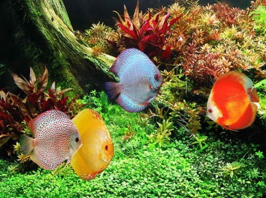 9217-cool-aquarium-decorations-with-ocean-fish