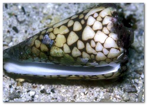 snail by vnnb2.