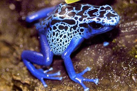10 loài vt có nÍc Ùc khçng khi¿p nh¥t th¿