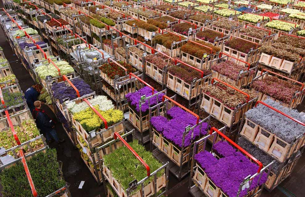 Description Bloemenmarkt Amsterdam S Flower Market
